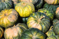 Green and yello pumpkins. A pile of muscat squash just collected. of dirty yellow and grees pumpkins just collected Stock Image