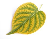 Green and yellow royalty free stock photos