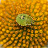 Green On Yellow Royalty Free Stock Photos