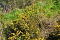 green yellow Arkivfoton