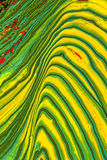 Green and yellow abstract painting Stock Image