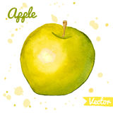 Green and yellow abstract watercolor apple. Natural and organic food theme. Fresh fruit vector illustration vector illustration