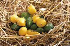 Green and yellow baby pattypan squashes on straw Royalty Free Stock Photo