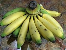 Green Yellow Banana on the table. Fresh fruit banana with green and yellow color on the Stock Photography