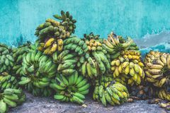 Green and yellow bananas on the ground. Some good,some rotten royalty free stock photo