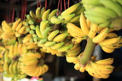 Green and yellow bananas. For sale Royalty Free Stock Images