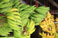 Green and yellow bananas Royalty Free Stock Image