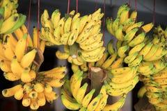 Green and yellow bananas Royalty Free Stock Images