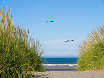Green and Yellow Beach Grass with Kites Stock Photography