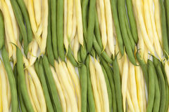 Green and yellow bean. Fresh green and yellow bean a arranged vertically Royalty Free Stock Photography