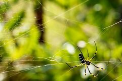 Green Yellow Black and White Spider Royalty Free Stock Photography