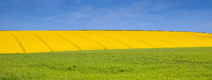 Green yellow and blue in lincolnshire Stock Image