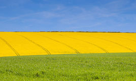 Green yellow and blue in lincolnshire Stock Images
