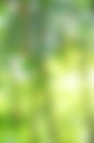 Green-yellow blur background Stock Photography