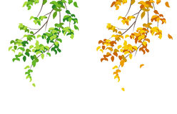 Green and yellow branches. Illustration of summer and autumn branches Royalty Free Stock Images
