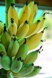 Green yellow combs bananas Royalty Free Stock Photography