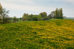 Green and yellow dike in the Netherlands Stock Images
