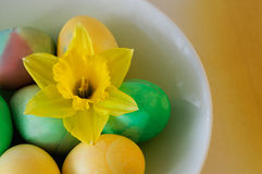 Green and Yellow Easter Eggs and Daffodil Stock Photo