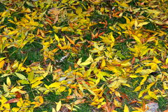 Green yellow fallen leaves carpet Stock Images