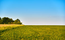 Green and yellow farm field over blue sky Stock Photos