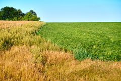 Green and yellow farm field over blue sky Stock Images