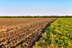 Green and yellow farm field over blue sky Royalty Free Stock Image