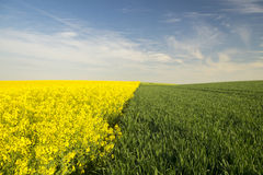 Green and yellow field on a background of blue sky Royalty Free Stock Images