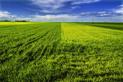 Green and yellow field. With blue sky and clouds Royalty Free Stock Photo
