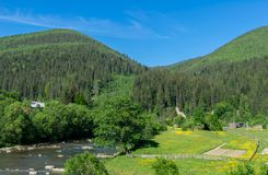 Green-yellow field by the river in the mountains royalty free stock photos