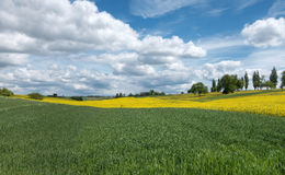 Green and yellow fields with cloudscape Royalty Free Stock Image