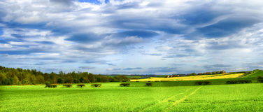 Green and yellow fields in early spring. Cloudy blue sky Royalty Free Stock Images