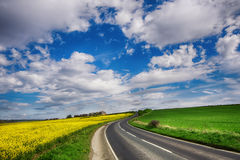 Green and yellow fields in early spring. Cloudy blue sky Stock Photography