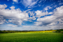 Green and yellow fields in early spring. Cloudy blue sky Royalty Free Stock Image