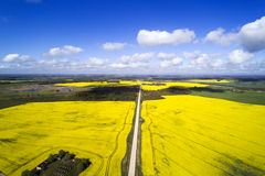 Green and yellow fields in latvian springtime. Royalty Free Stock Photos