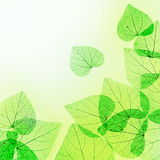 Green and Yellow Floral Border of Leaves Stock Photos