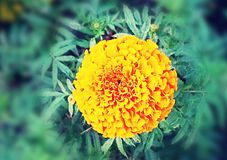 Yellow flower beauty stock images