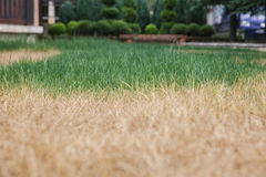 Green and yellow grass Royalty Free Stock Photos