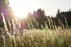 Green and Yellow Grass Field Stock Image