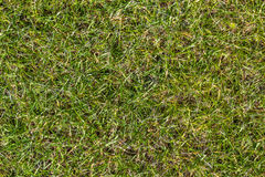 Green yellow grass field at spring Stock Photography