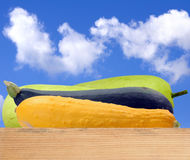 Green and yellow hard squash Royalty Free Stock Photography