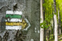 Hiking trail signs symbols in springtime on tree Royalty Free Stock Photography