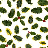 Green and yellow holly leaves, some with berries, on a white background. Seamless so image can be repeated endlessly. Perfect for printed fabric, wrapping Stock Photography