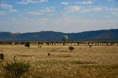 Green and yellow hot air balloon flying over the savannah with elephant Royalty Free Stock Image