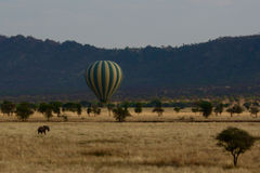 Green and yellow hot air balloon flying over the savannah with elephant Royalty Free Stock Photos