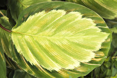 Green and yellow Leaf - Background stock images
