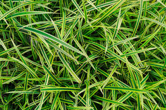 Green yellow leaf background, grass Royalty Free Stock Images