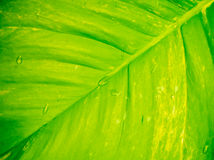 Green and yellow leaf background Royalty Free Stock Photo