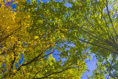 Green and yellow leaves Royalty Free Stock Image