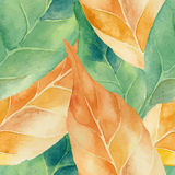 Green and yellow leaves background. Royalty Free Stock Photography