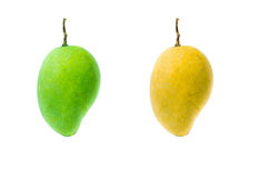 Green and yellow mango Stock Photos